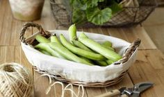 Beans and peas, in their many guises, are grown and consumed across the world; prized for their nutritious content and versatility in recipes. Growing Beans, Types Of Beans, Easy Vegetables To Grow, Runner Beans, Celery, Asparagus, Green Beans, Seeds, Tasty