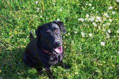 Unsere Tierische Urlaubs-Expertin - Hündin Xenia (c) Cony Wiedenig   #wandern #kärnten #wandernmithund #urlaubmithund #österreich #nassfeld #kärnten #gipfel #urlaub #dogs #hikingwithdogs #gailtal #gailtaleralmkäse #almen #hütten