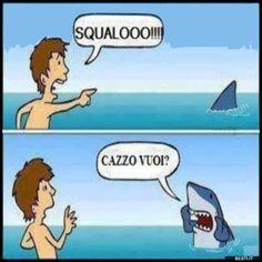 Squalo | BESTI.it - immagini divertenti, foto, barzellette, video