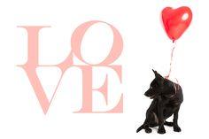 Send a Doggie Message of Love this Valentine's Day!   Pretty Fluffy