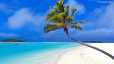Coconut Tree on a white sand beach of Maldives