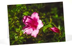 Photo Greeting Cards, How To Introduce Yourself, Pink Flowers, Flower Photography, Etsy Shop, Hdr, Rose, Plants, Feels