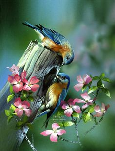 Bird Painting ~ Animal Paintings ~ Wildlife Art ~ Animal Paintings & Animal Artwork~ #Paintings of Wildlife ~ #SmokyMountains #Tennessee