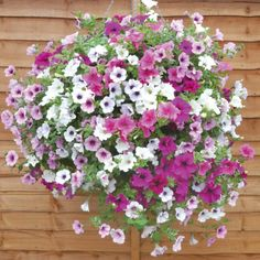 Best Flowers For Hanging Baskets | Flowers Flower Plants Annual Plants Lucky Dip Basket Collection
