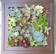 Can't wait to make this!! It can hang on the wall as a vertical garden!