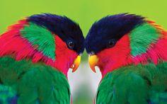 Parrot HD Wallpapers Backgrounds Wallpaper