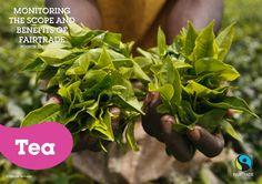 2012 Fairtrade Tea Impact and Facts by Fairtrade International via slideshare Fair Trade, Fails, Tea, Fair Trade Fashion, Teas, Thread Spools, Tees
