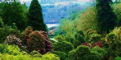 Trebah Gardens# Cornwall