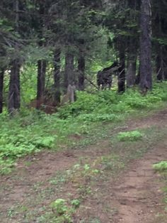 Hiking Trails near Spokane