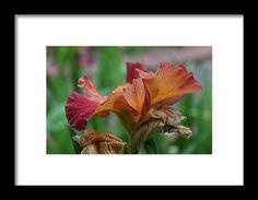 iris, orange, flower, nature, bloom, interior design, michiale, schneider, photography