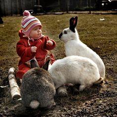 Himalayan Giant Rabbits