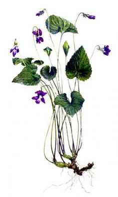 Robert Stagg | American Society of Botanical Artists