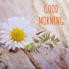 Good Morning image with flower