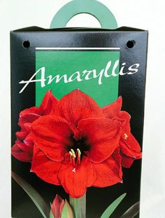 "These giant amaryllis kits are easy to grow indoors, and make great gifts for coworkers. Each hybrid bulb will produce two18-24"" stems, bearing 4 or 5 large, long lasting flowers that are over 8 inches in diameter. These beautiful vibrant red flowers are simple to grow indoors and require very little maintenance. If you have a social worker in your life who could use a little something to brighten up an office, an amaryllis kit is the perfect gift! Other colors available on the Etsy website."