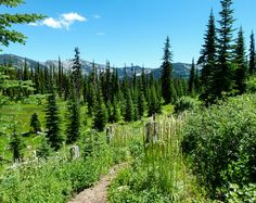 Going Off-the-Beaten-Path on Elk Meadows Road in Idaho's Lolo National Forest. #Idaho #wilderness