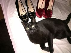 Cats Mrow!