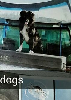16 Best Lost Dogs Or Images Find Pets Losing A Pet Pet Adoption