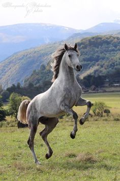 Check out stable-mates.com, the world's first online community marketplace for horse lovers.
