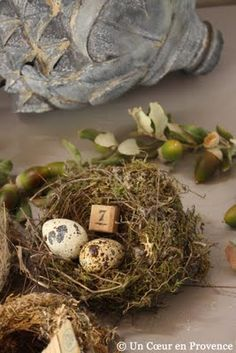 bird nest collection