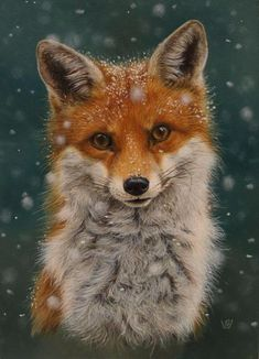 Winter fox - maybe painted as a wooden sign or ornament, . - Winter fox – maybe painted as a wooden sign or ornament, - Cute Baby Animals, Animals And Pets, Fox Pictures, Cute Fox, Fox Art, Red Fox, Animal Drawings, Art Drawings, Animal Photography