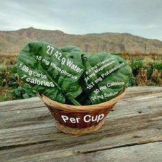 Here's a few reasons why Popeye loves his #spinach. . . . . . . #food #farmtotable #foodporn #instafood #yumm #delicious #codywyoming #codywy #codywyo #wyoming #idaho #montana #wyominggrown #growninwyoming #thatswy #wyomade #yellowstone #tetons #seedtoplate #farmtofork #eat #eathealthy #eathealthyfood #healthyfood #healthyeats #farm #farmtablewest