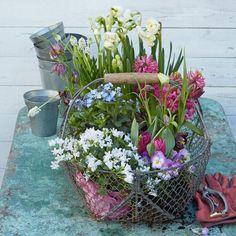 Garten im Frühling Flower Art Images, Succulent Bouquet, Flower Wallpaper, Hanging Baskets, Spring Flowers, Container Gardening, Planting Flowers, Flower Plants, Flower Power