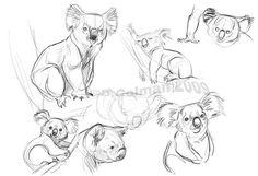 Koala Studies by davidsdoodles.deviantart.com
