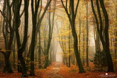 Beautiful forest photography by Diemen, Netherlands based photographer Lars van de Goor. You can't look at this picture without wanting to sit next to those trees. Forest Photography, Landscape Photography Tips, Photography Portfolio, Art Photography, Magical Photography, Pretty Pictures, Cool Photos, Pretty Pics, Beautiful Forest