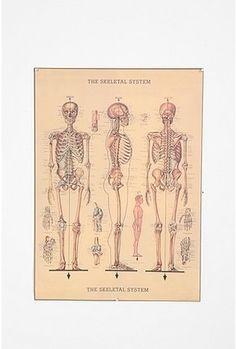 Skeleton Poster - StyleSays