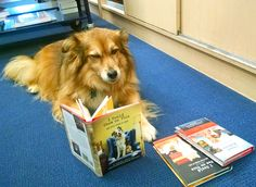 Our bookstore dog Maxi takes a reading break with her favorite series