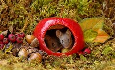 When photographer Simon Dell saw a mouse scurrying around his garden, he decided to give it a treat. Then, he built him an estate. The resulting mice photos are adorable. Nature Animals, Animals For Kids, Animals And Pets, Baby Animals, Funny Animals, Cute Animals, Beautiful Creatures, Animals Beautiful, Mouse Photos