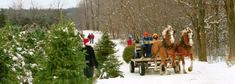 We have information for all kids about the REAL TREE industry. Virtual Christmas Tree Farm