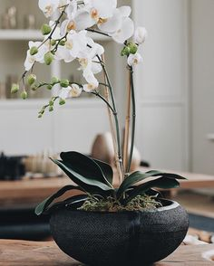 """I love orchids because they're so simple and beautiful. There's no better gift to give or receive, whatever the reason, whatever the decor."" - @donnakaranthewoman  #NationalOrchidDay"