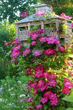 Clematis climbing the birdhouse.