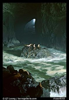 [][][] Sea lion cave, Oregon.