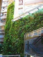 Barcelone   Mur Vegetal Patrick Blanc