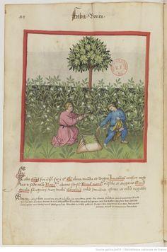 IBN BUTLÂN , Tacuinum sanitatis 15. Jhd Latin 9333  Folio 47v
