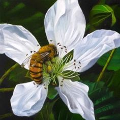 Blackberry Blossom And Bee 4x4, painting by artist M Collier