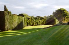 Image result for carved hedge