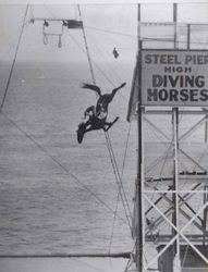 Horses are great swimmers.  I don't think many are up for diving.