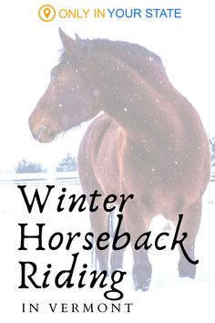 Enjoy winter horseback riding in Vermont! A fun day trip with beautiful scenery, you'll love the snowy trail rides at Lajoie Stables. This makes for a great date or family-friendly outdoor activity. Horseback Riding Trails, Trail Riding, Winter Fun, Winter Travel, Activities To Do, Outdoor Activities, Swimming Holes, Beautiful Scenery, Stables