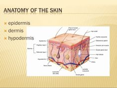 chart of how red light affects epidermis and dermis Skin Anatomy, Skin Structure, Red Light Therapy, Cosmetology, Skin Makeup, Skin Care Tips, Beauty Tips, Beauty Products, Cards
