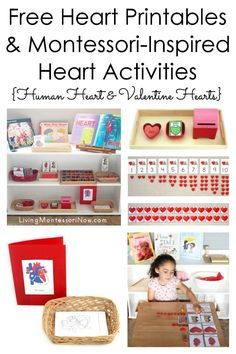 Free Heart Printables and Montessori-Inspired Heart Activities {Human Heart and Valentine Hearts} Free Preschool, Preschool Printables, Montessori Activities, Montessori Homeschool, Montessori Kindergarten, Physical Activities, Heart Anatomy, Kindergarten Themes, Valentines Day Activities
