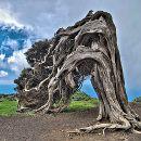6 árboles únicos en el mundo que debes conocer |#Medio ambiente - #Ecología ecoagricultor.com