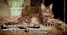 Our beautiful boy, Rolz, looks ever the part of the lion in this quote made famous by the late Fernand Mery.  http://zeezoey.com/blog/feline-quotable-photo-series-a-cat-is-king-of-the-jungle/