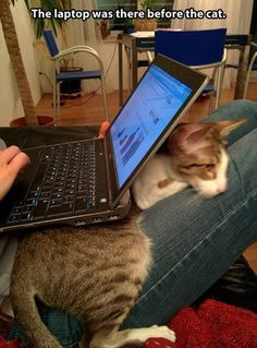 Submitted by: Unknown                        Tagged:   Cats ,  cute ,  snuggle ,  laptop ,  warm   Share on Facebook