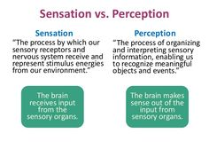 ap psych sensation and perception essay Sensation and perception essay: know all the monocular cues that includes depth cues know all the binocular cues be able to explain the difference between the two categories above.