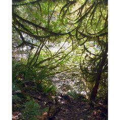 Lynn canyon :) #getoutdoors #green #explore #explorebc #explorecanada #explorenature #nature #northshore #northvan #naturelovers #natureporn #discoverbc #discovercanada #bc #adventuredog #adventure #dogsofinstagram #pupster #pupsofinstagram #ilovebc #instapup #instahike #ilovenature #hikingwithdogs #happydog #lovemylife #wild #westcoastbestcoast #pnw #lynncanyon by sarahlittle86