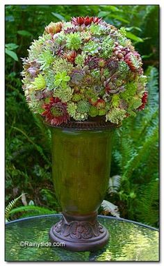 Potted succulent topiary