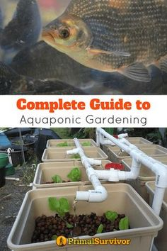"""Complete Guide to Acquaponics. How to build your own Aquaponics garden to grow your own Survival Food. """"Break-Through Organic Gardening Secret Grows You Up To 10 Times The Plants, In Half The Time, With Healthier Plants, While the Fish Do All the Work. Backyard Aquaponics, Hydroponic Gardening, Organic Gardening, Gardening Tips, Aquaponics Plants, Gardening Direct, Hydroponic Vegetables, Gardening Vegetables, Gardening Books"""